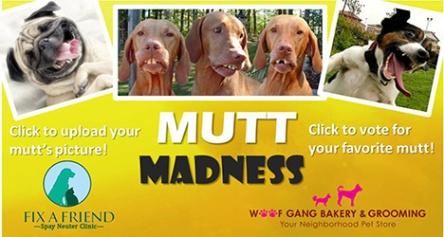 Mutt Madness